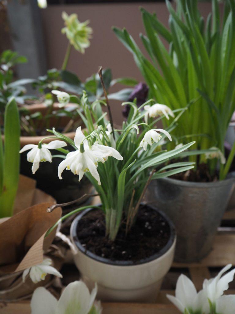 2017-03-skoen-och-kreativ-fruehlingsdeko-balkon-welcome-spring (4)