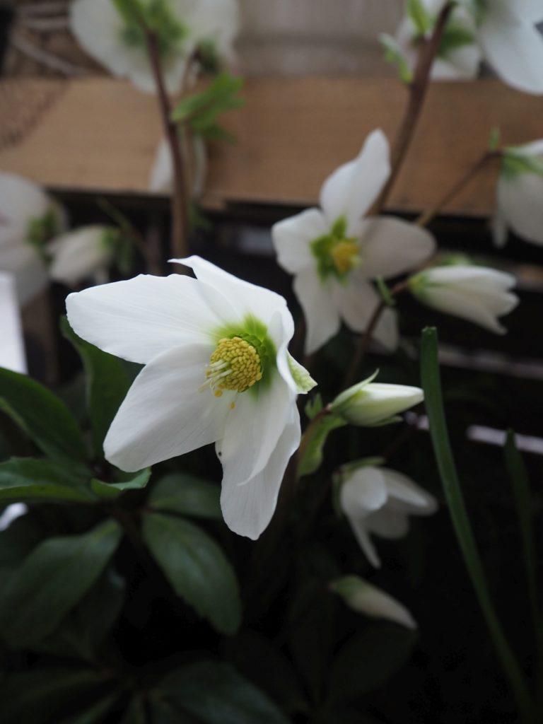 2017-03-skoen-och-kreativ-fruehlingsdeko-balkon-welcome-spring (7)