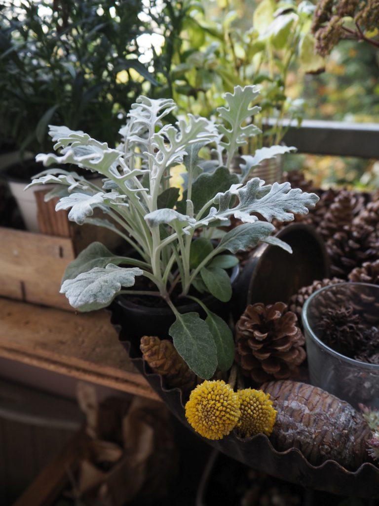 2017-10-skoen-och-kreativ-deko-balkon-herbst-update (10)